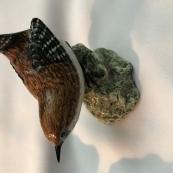 英国的小鸟以及一些小动物