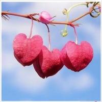 ♥520~~~我爱你~~~♥