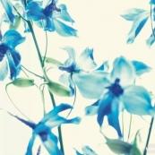 如何将花朵拍出透明质感?