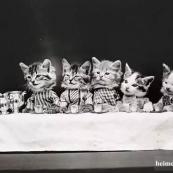 艺摄如此萌的动物摄影竟拍摄于100年前