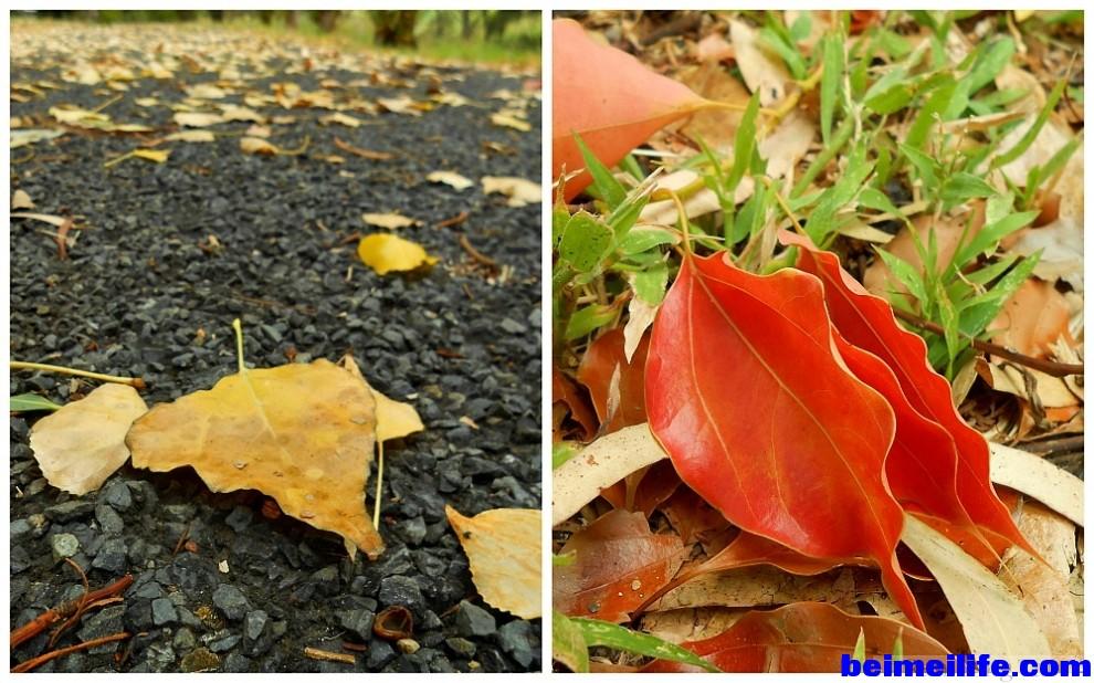fallen-leaves(pp_w990_h618_m1312888779_a25_pBR).jpg
