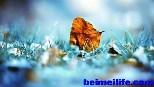 The-First-Fallen-Leaf.jpg