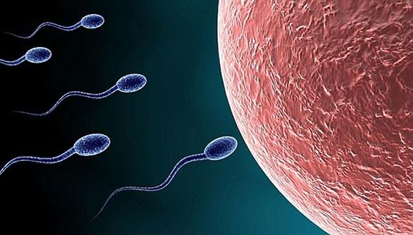 科学家研发新型男性避孕药 可立即生效阻止精子游动