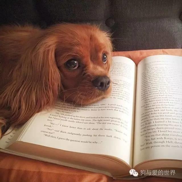难道我不好看吗,为什么非要看书呢?