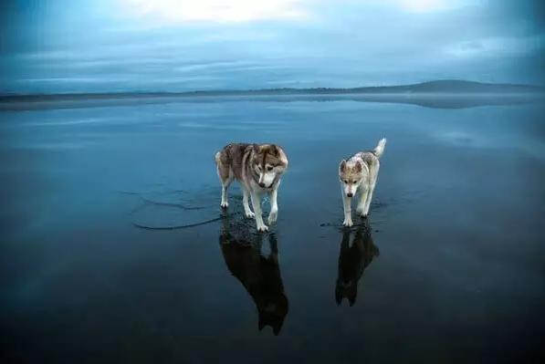 太唯美了,我是一只来自北方的狼!