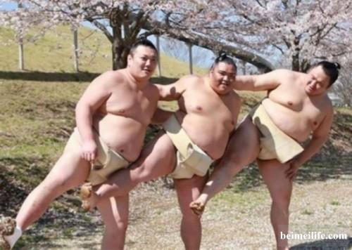 日本相扑手樱花树下拍妩媚写真 网友:想打人