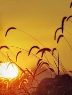 深情岁月:杨俊文《那些个黄昏与黎明》朗诵  林平