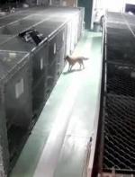 """狗狗领养前一天竟然""""越狱""""逃跑,跟着监控追过去的画面让人泪目…… ..."""