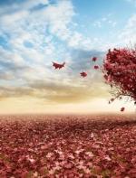 薇微诗话:驾着朝霞的羽翼,我,飞到了你的唇边(作者/歌德  朗诵/依然  潇雨) ...