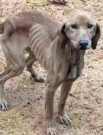 发现一只瘦到皮包骨的狗狗,它十分低落,一只低着头...