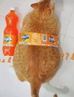 网友买了一只小柴犬,刚带回家就被家里的橘猫压在了身下,简直……辣眼睛…… ...