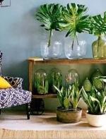史上最全的吸毒植物 · 新房必备  一起去旅行