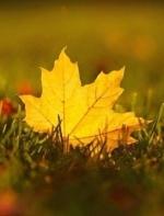 深情岁月:杨忠良《秋天的落叶》朗诵  浩然
