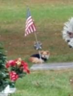 狗狗坚守马麻墓碑旁听到家人呼唤才离开,走没几步又回头坐下
