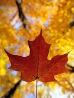加拿大新移民收入创新高