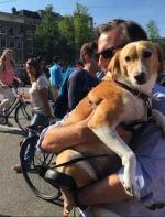 如果狗狗有选择的话,它们会想生活在哪里?