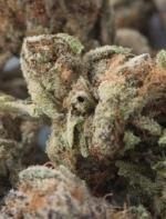 大麻合法化以后,租户是否有权在房间抽大麻?