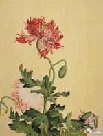 清宫花卉图册:花枝翠鸟间 仿佛一个春天在追赶你