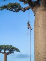 这个英国哥们儿把爬树玩成了专业的,简直就是现实版的人猿泰山啊! ...
