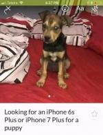 很明显,这只小狗的主人并不爱它,只是想换一部iPhone...而已! ...