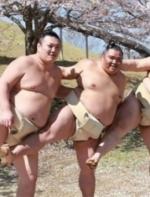 日原形扑手樱花树下拍娇媚写真 网友:想打人(组图)