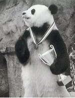 中国最传奇的大熊猫去世