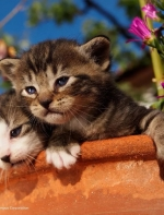 为拍猫走遍全球,作品登上《国家地理》,这个世界顶级猫奴,豆瓣给分9.4 ...