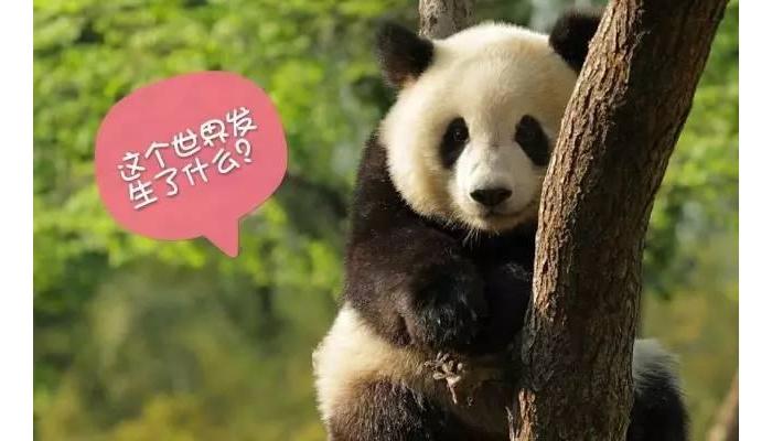 大熊猫:我被降级了,你们还爱我吗?