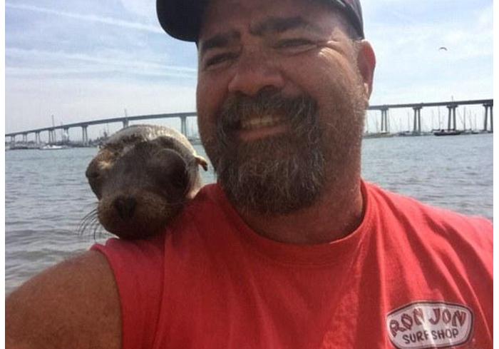糙汉子莫名被海豹喜欢并赖上,小家伙靠在肩膀上亲密打盹