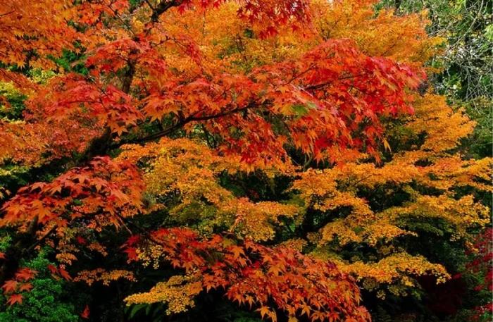 北美的秋天已经美成这样了 你在家里还待得住吗?