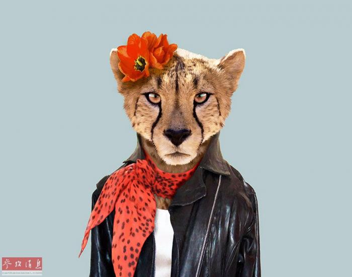 """现实版动物城:艺术家将动物打扮成""""人类模样"""""""