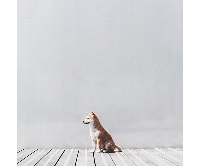 给狗狗拍极简主义艺术照 刷爆了instgram