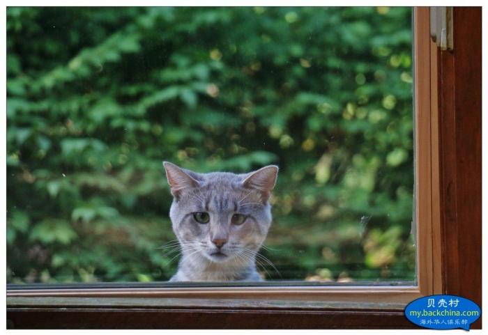 猫儿打架,纱窗遭殃。补或不补,姑且冬藏。