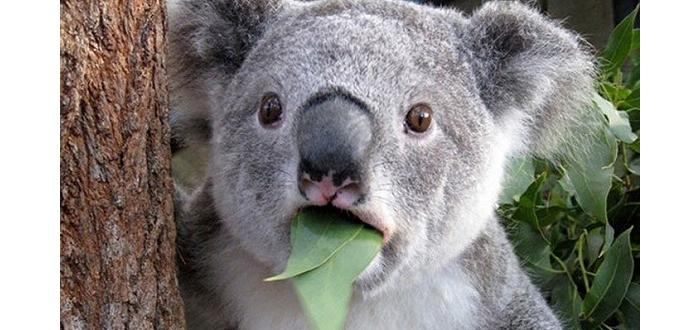 澳洲动物园里的动物怎么都慢吞吞的