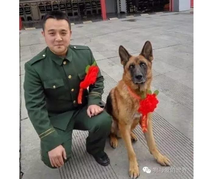 我退伍了,想带上我的搜救犬战友,可以吗?