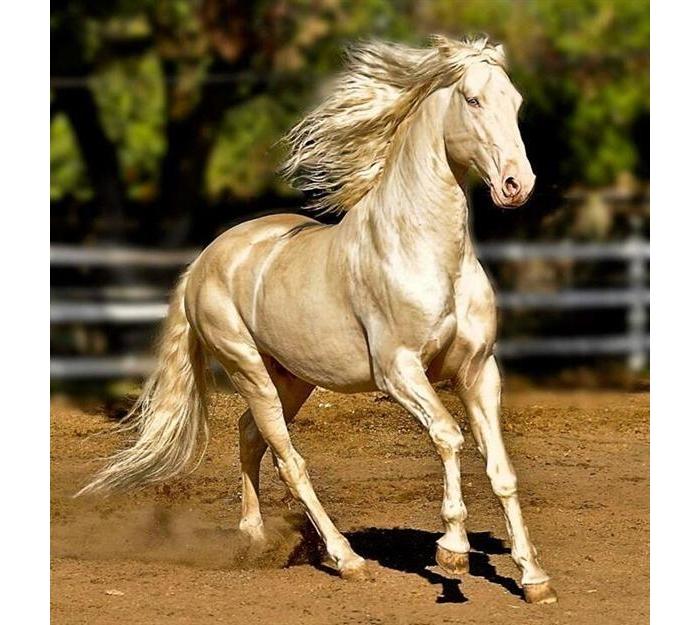 遇见世界上最美丽的马:来自天堂的马