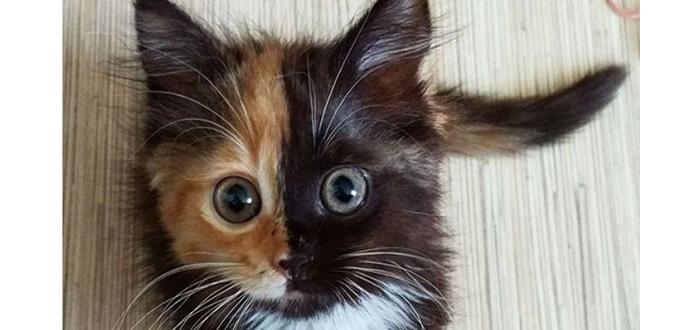 这只双面猫人见人爱,刷爆了整个互联网