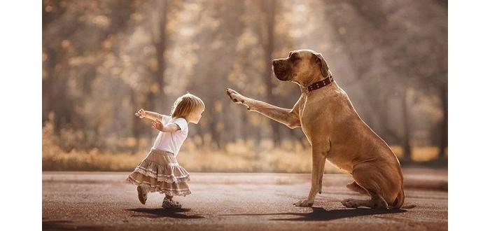 大狗狗和小宝宝一起 才是世上最暖的治愈系