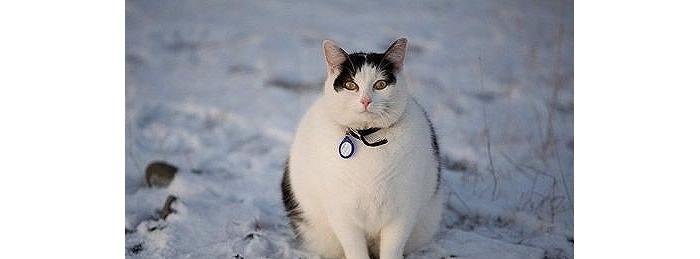 我的宠物怎么可以这么胖