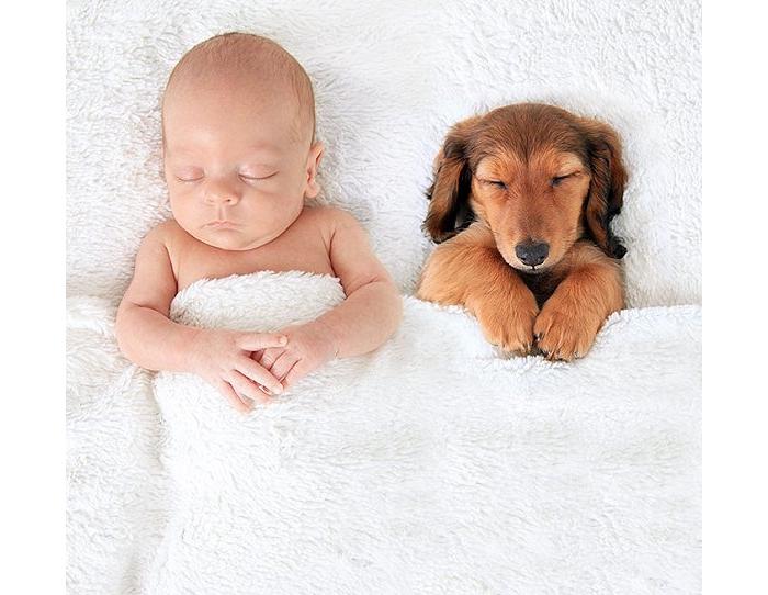 狗狗是宝宝最好的抱枕
