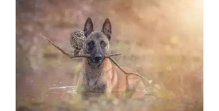 狗狗被主人赶走,一起长大的猫头鹰在同一天也消失了……